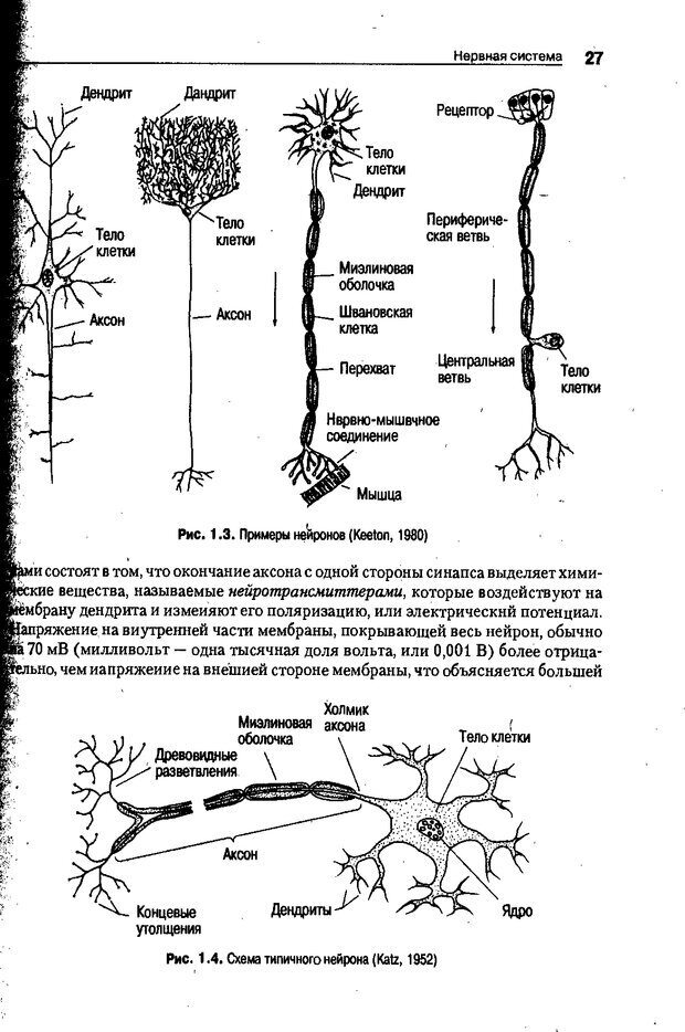 DJVU. Когнитивная психология [5-е издание]. Андерсон Д. Страница 24. Читать онлайн