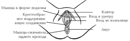 Сексуальный женский массаж и все эрогенные точки у женшин