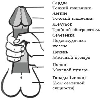 Форум мужчин практикующих оргазм без семяизвержения